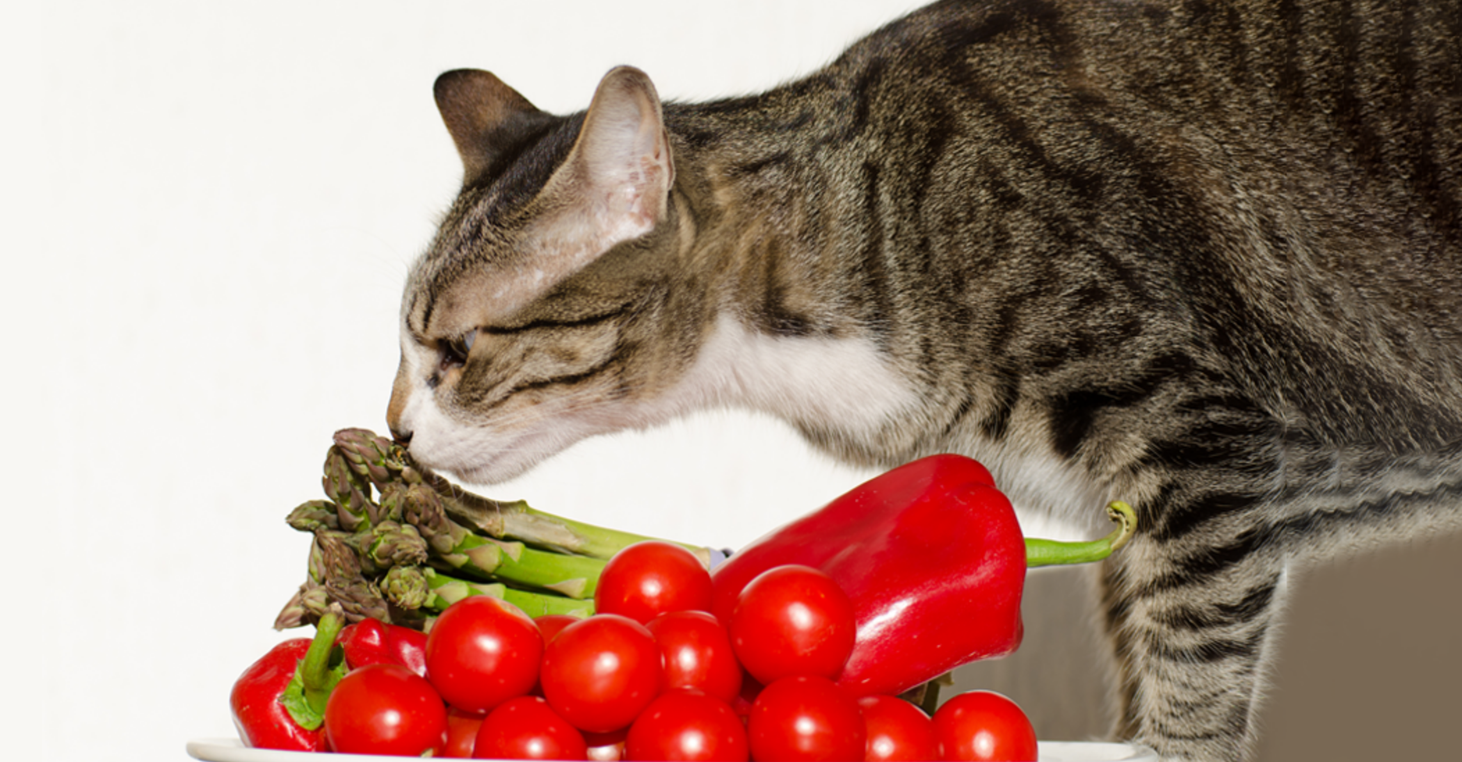 photo d'un chat reniflant des legumes