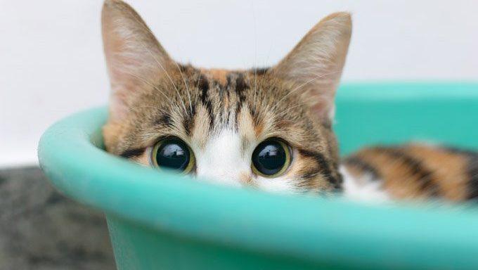 chat qui a peur des humains