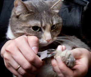 couper griffes du chat
